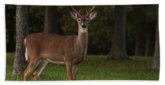 Beach Towel featuring the photograph Deer In Headlight Look by Tammy Espino