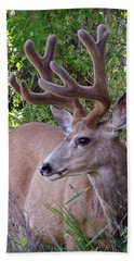 Beach Towel featuring the photograph Buck In The Woods by Athena Mckinzie