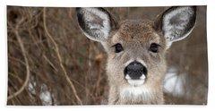 Deer Beach Sheet by Jeannette Hunt