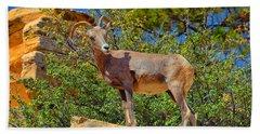Desert Bighorn Sheep Beach Towel by Greg Norrell