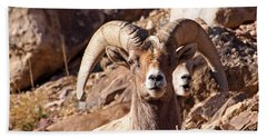 Desert Bighorn Sheep Beach Sheet