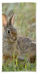 Desert Cottontail Beach Towel