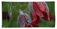 Dew Covered Pasque Flower Beach Towel