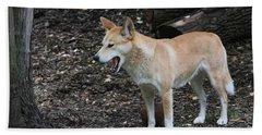 Dingo #2 Beach Sheet