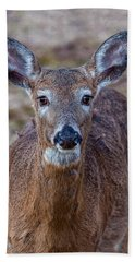 Doe Portrait Beach Sheet