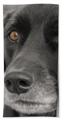 Dog Peek A Boo Beach Towel