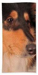 Dog Portrait Beach Towel by Randi Grace Nilsberg