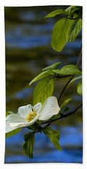 Dogwood On The Merced Beach Sheet by Bill Gallagher