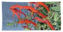 Beach Towel featuring the photograph Dolphin Plant by Brenda Brown