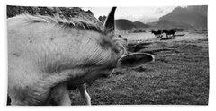 Donkeys Beach Sheet