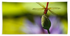 Dragonfly Display Beach Towel