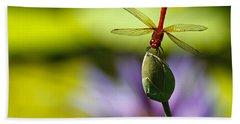 Dragonfly Display Beach Sheet