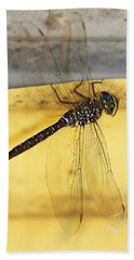 Beach Towel featuring the photograph Dragonfly Web by Melanie Lankford Photography