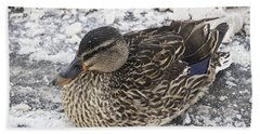 Duck Setting On A Winter Road Beach Towel