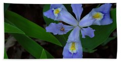 Beach Towel featuring the photograph Dwarf Crested Iris With Spider by Daniel Reed