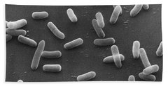 E. Coli Bacteria Sem X16,000 Beach Towel