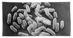 E. Coli Bacteria Sem X22,000 Beach Towel