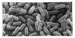 E. Coli Bacteria Sem X24,000 Beach Towel
