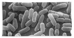 E. Coli Bacteria Sem X25,000 Beach Towel