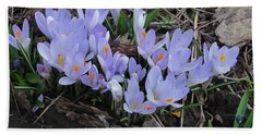 Early Crocuses Beach Towel