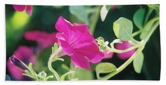 Beach Towel featuring the photograph Early Morning Petunias by Alan Lakin