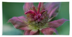 Early Spring Bee Balm Bud Beach Towel by Denyse Duhaime