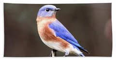 Eastern Bluebird - The Old Fence Post Beach Sheet by Travis Truelove