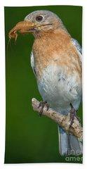 Eastern Bluebird With Katydid Beach Towel by Jerry Fornarotto