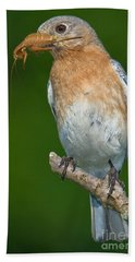 Eastern Bluebird With Katydid Beach Sheet by Jerry Fornarotto