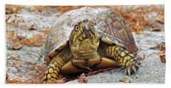 Beach Sheet featuring the photograph Eastern Box Turtle by Cynthia Guinn