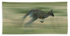 Eastern Grey Kangaroo Female Hopping Beach Sheet by Ingo Arndt