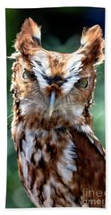 Eastern Screech-owl Beach Towel