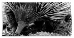Echidna Beach Towel by Miroslava Jurcik