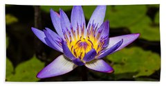 Egyptian Blue Water Lily  Beach Towel by Scott Carruthers