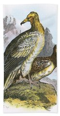 Egyptian Vulture Beach Towel by English School