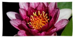 Elegant Lotus Water Lily Beach Towel by Denyse Duhaime
