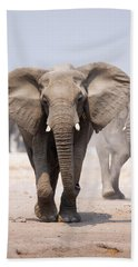 Elephant Bathing Beach Towel