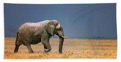 Elephant In Grassfield Beach Sheet
