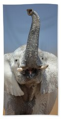 Elephant Portrait Beach Towel