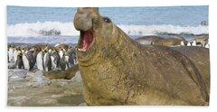 Elephant Seal Roaring Beach Towel