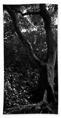 Beach Towel featuring the photograph Elizabethan Gardens Tree In B And W by Greg Reed