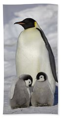 Emperor Penguin And Two Chicks Beach Sheet by Frederique Olivier
