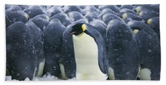 Emperor Penguin Trying To Get Beach Towel by Frederique Olivier