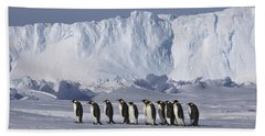 Emperor Penguins Walking Antarctica Beach Towel by Frederique Olivier