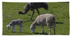 Emu And Sheep Beach Towel