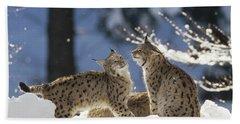 Eurasian Lynx Pair Bayerischer Wald Np Beach Towel