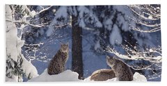 Eurasian Lynx Trio Resting Beach Towel