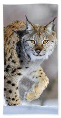 Eurasian Lynx Walking Beach Towel