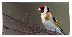 European Goldfinch  Beach Towel