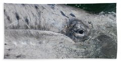 Eye Of A Young Gray Whale Beach Towel by Don Schwartz